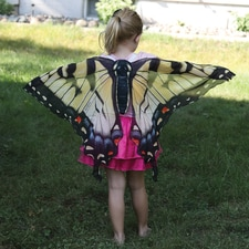 Swallowtail Butterfly Wings