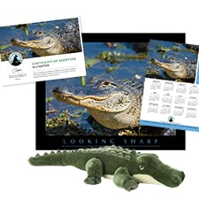 Adopt an Alligator
