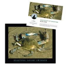 Blue Crab | National Wildlife Federation