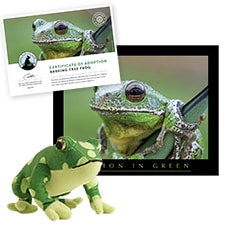 Tree Frogs | National Wildlife Federation