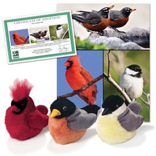 Backyard Wildlife Series 1 Collection