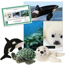 Marine Wildlife Series 1 Collection