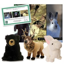 Woodland Wildlife Series 2 Collection