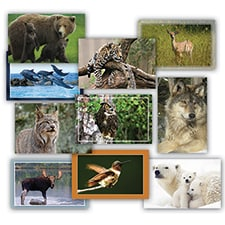 Wildlife Card Assortment