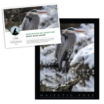 Adopt a Great Blue Heron