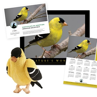 Adopt An Americanbr Goldfinch Shop Nwf