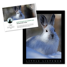 Adopt a Snowshoe Hare