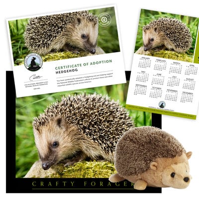 Adopt a Hedgehog