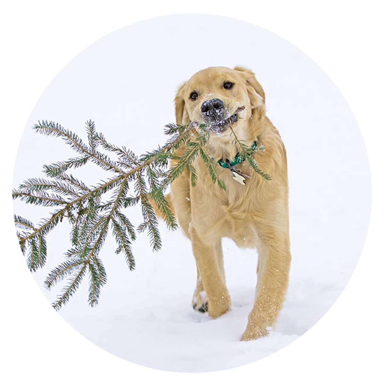 Bear\'s Christmas Tree Card   Shop NWF