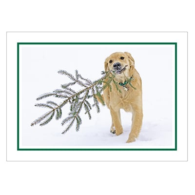 Bear's Christmas Tree Card