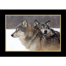 Wildlife christmas cards animal christmas cards at shopnwf taking a break card m4hsunfo