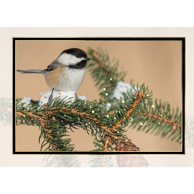Black-capped Chickadee on Snowy Pine Card