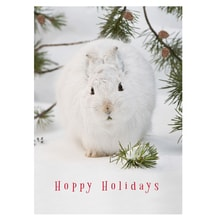Snowshoe Hare Card