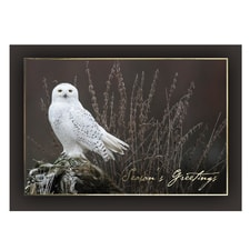 Snowy Owl on Alert Card