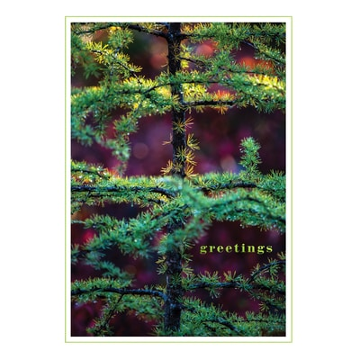 Larch Tree in Fall Card