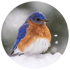 Bluebird in the Snow Envelope Seals