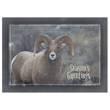 Snowy Big Horn Sheep Card