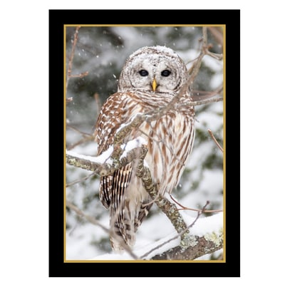 Snowy Barred Owl Card