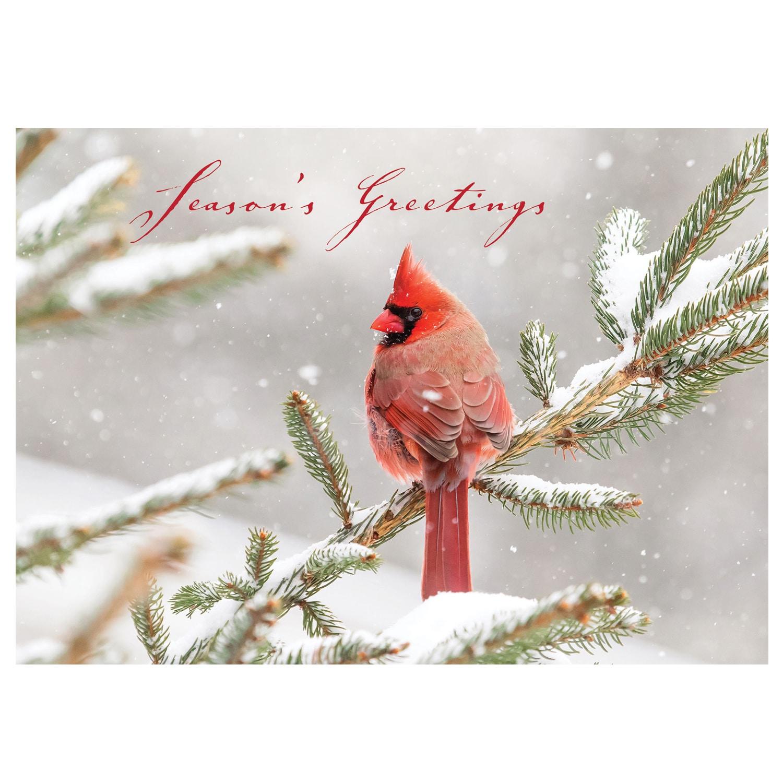 Christmas Greeting Card   Shop NWF