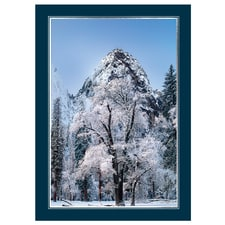 Black Oaks in Yosemite Card