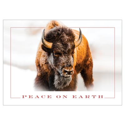Winter Bison Card