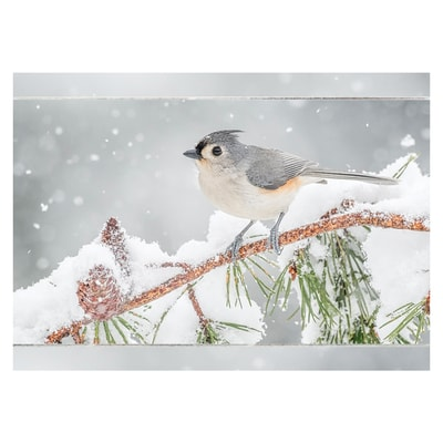 Alerted Tufted Titmouse Card