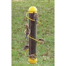 Finch Tube Feeder with Spiral Perch
