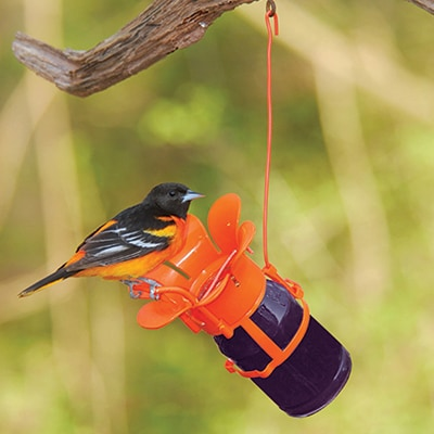 Oriole Feeder with Jelly