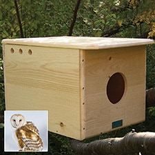 Barn Owl Nesting Box