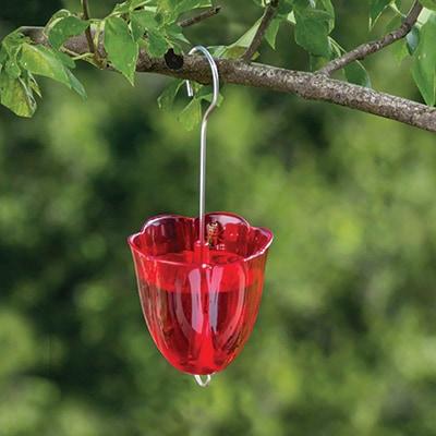 Hummingbird Feeder Ant Moat Shop Nwf