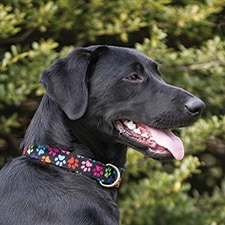 Paws Design Dog Collar