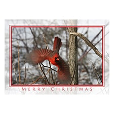New Trees for Wildlife - Cardinal