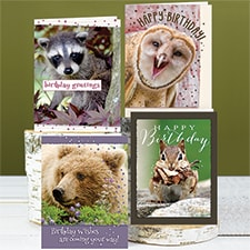 Woodland Creatures Birthday Assortment