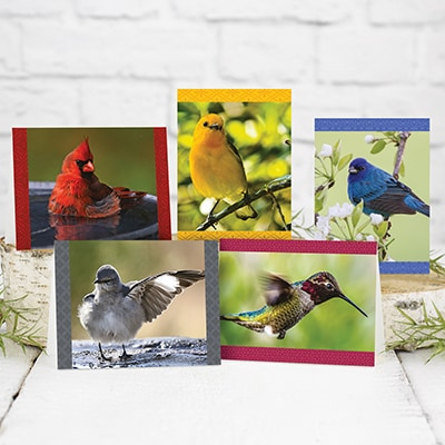 Brilliant Birds Assortment