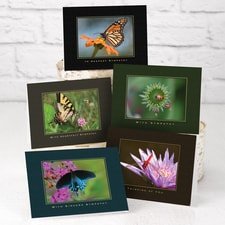 Winged Whimsy Sympathy Assortment