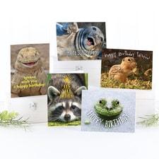 Wild Wishes Birthday Card Assortment