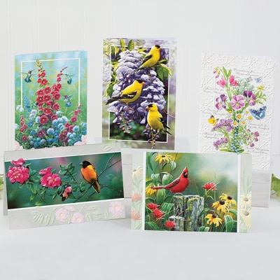 Wild Colors All-Occasion Card Assortment