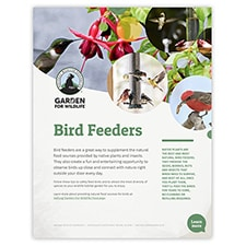 Bird Feeders Tip Sheet