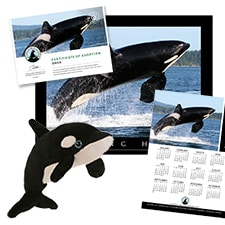 Adopt an Orca