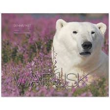 White Bear of the North Wapusk Book