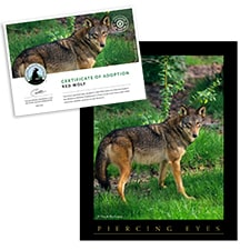 Adopt a Red Wolf