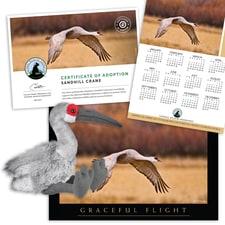 Sandhill Crane National Wildlife Federation >> Sandhill Crane National Wildlife Federation