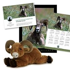 Adopt a Bighorn Sheep