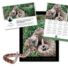 Adopt a Western Diamondback Rattlesnake