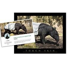 Adopt a Tapir