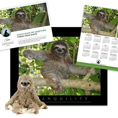 Adopt a Three-Toed Sloth