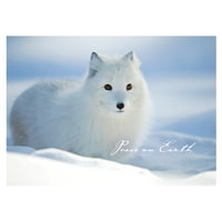 Arctic Fox in Snow Card