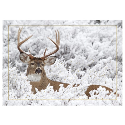 Buck in Winter Card