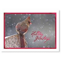 Winter Cardinal in Snow Card