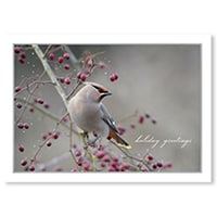 Bohemian Waxwing on Branch Card